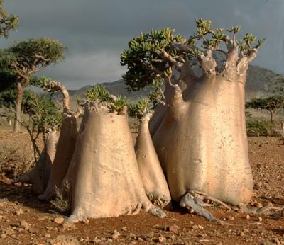 albero bottiglia
